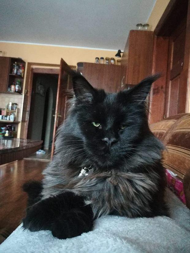Zdjęcie numer 8 w galerii - Karmel, Daktyl, Kapitan Benny, Ptyś, Wiesław... Kochane i piękne - oto Wasze koty [GALERIA NA DZIEŃ KOTA]