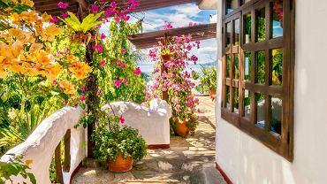 Pnącze - jak je uprawiać i jakie gatunki roślin najlepiej sprawdzą się na balkonie? Zdjęcie ilustracyjne