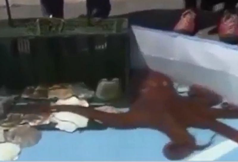 Ośmiornica-wyrocznia wylądowała na talerzu