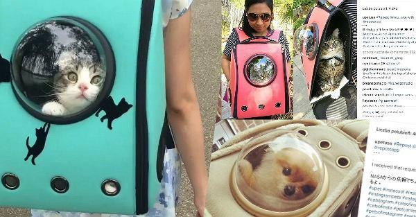 Nowoczesny transporter dla psa pub kota.