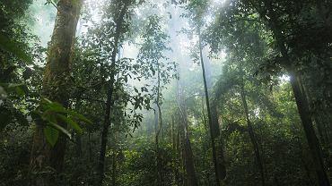 Na Facebooku pojawiły się oferty sprzedaży fragmentów lasów deszczowych