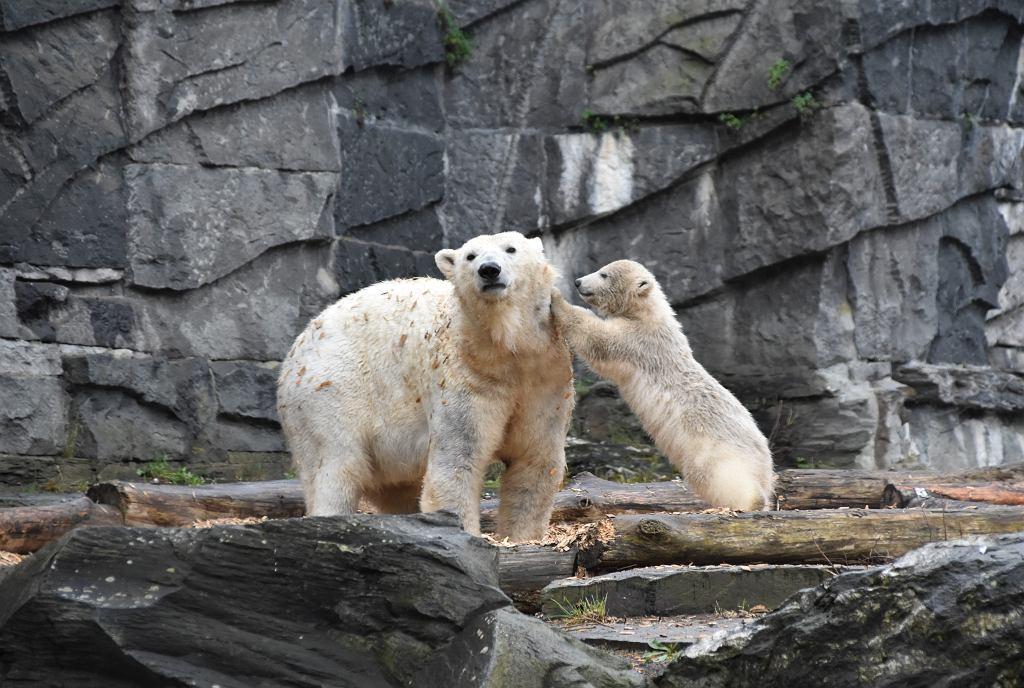 Kryzys w niemieckim zoo. Może być zmuszone do zabijania zwierząt (zdjęcie ilustracyjne)