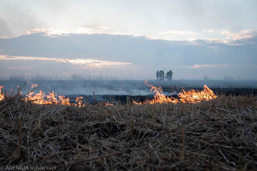 Pożar w Biebrzańskim Parku Narodowym. Na koncie już ponad milion złotych
