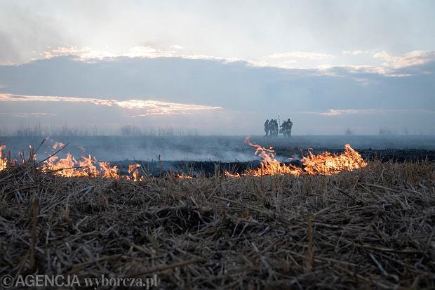 """Udało się zebrać już milion złotych na walkę z pożarem w Biebrzańskim Parku Narodowym. """"Dziękujemy!"""""""