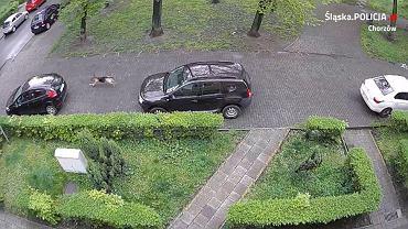 Pies przegryzał opony