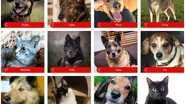 Psy i koty do adopcji