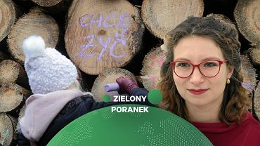 Gosek-Popiołek o wycince drzew w Bieszczadach: Prace miały zacząć się dwa lata temu. Do akcji weszła Olga Tokarczuk