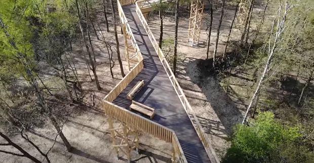 Nowa ścieżka w koronach drzew w Polsce już otwarta. To druga taka atrakcja w kraju