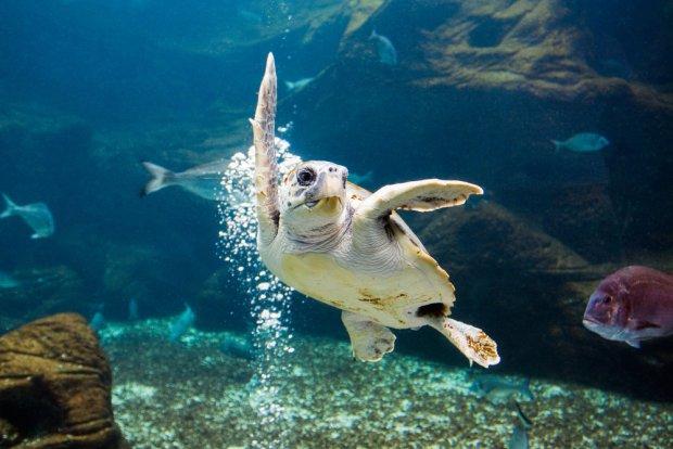 Żółw w Grecji