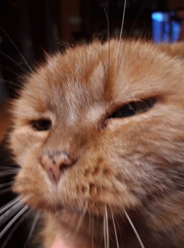 Zdjęcie numer 6 w galerii - Karmel, Daktyl, Kapitan Benny, Ptyś, Wiesław... Kochane i piękne - oto Wasze koty [GALERIA NA DZIEŃ KOTA]