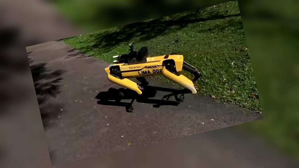 Robot-pies pilnujący zasady dystansu społecznego