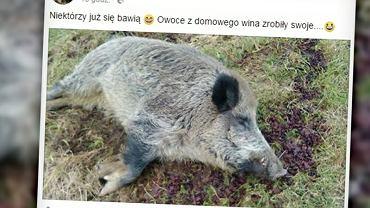 Pijany Chrumek |