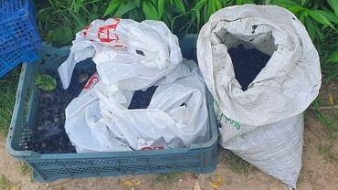 Wietnamczycy złowili 30 kilogramów ślimaków
