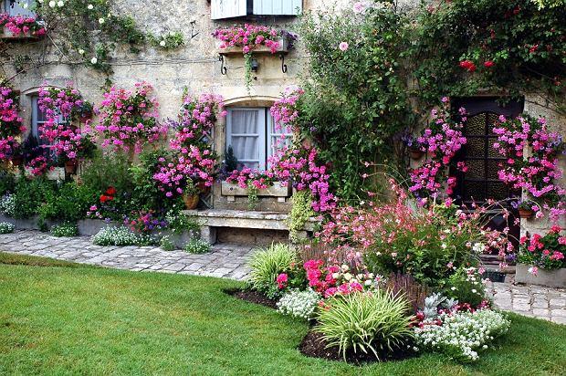 Rośliny pnące, które pokryją nieciekawe części ogrodu