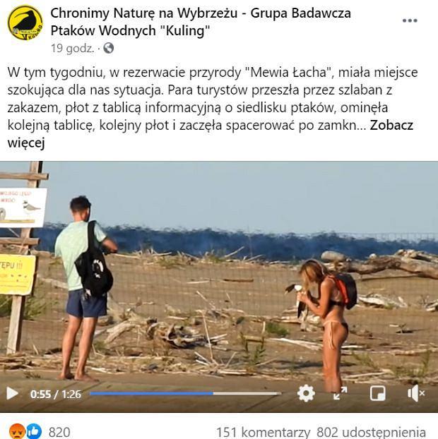 Dwoje turystów, mimo zakazu weszło na teren rezerwatu 'Mewia Łacha' na Wyspie Sobieszewskiej. Młodzi ludzie wzięli na ręce młodego ohara i robili sobie z nim zdjęcia. Sprawę bada policja.