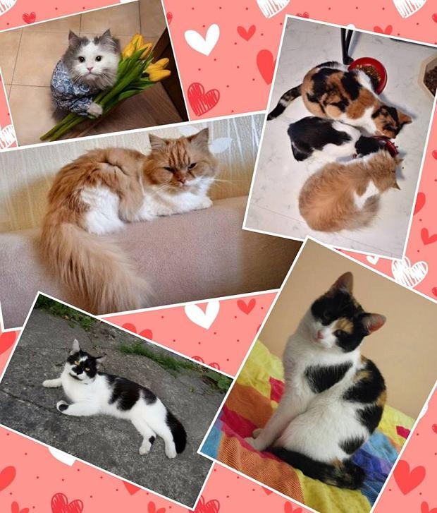 Zdjęcie numer 5 w galerii - Karmel, Daktyl, Kapitan Benny, Ptyś, Wiesław... Kochane i piękne - oto Wasze koty [GALERIA NA DZIEŃ KOTA]