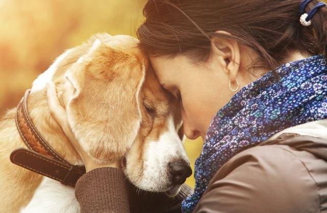 Psy wyczuwają ludzkie emocje - zwłaszcza płacz?