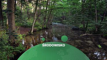 Wody Polskie chcą udrożnić rzekę Leśną Prawą, która płynie przez Puszczę Białowieską