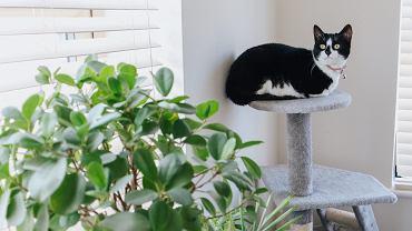 Trujące rośliny doniczkowe. Co może zaszkodzić Twojemu psu lub kotu? [LISTA]