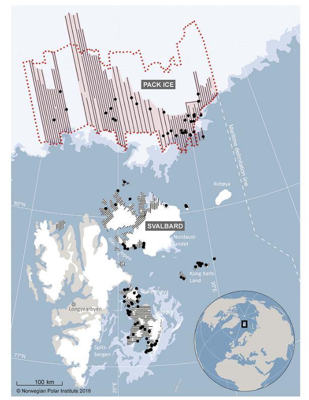 Mapa obszaru, na którym Norweski Instytut Polarny przeprowadził spis niedźwiedzi polarnych w 2015 r. i gdzie zwierzęta były widziane podczas czterotygodniowego badania.