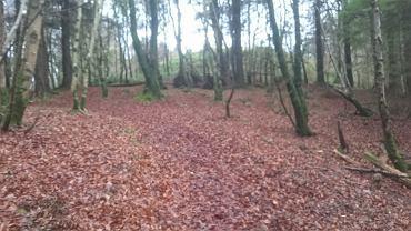 W lesie w Carns na północy Irlandii odnaleziono ciało 30-letniej Polki, Natalii K.