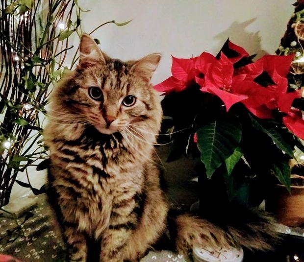 Zdjęcie numer 4 w galerii - Karmel, Daktyl, Kapitan Benny, Ptyś, Wiesław... Kochane i piękne - oto Wasze koty [GALERIA NA DZIEŃ KOTA]