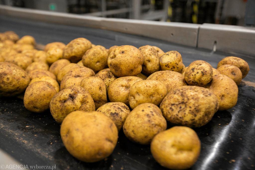 Ziemniaki do produkcji chipsów