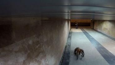 """Pies w przebraniu pająka """"sterroryzował"""" Warszawę. Kadr z filmu: """"Mutant Giant Spider Dog"""""""