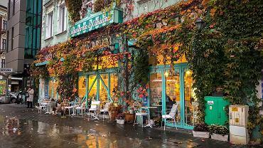 Winobluszcz na murze kawiarni Abadaba w Sosnowcu