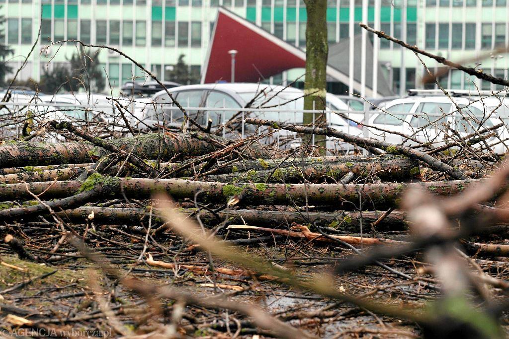 Kielce, luty 2014. Wycięte drzewa przed urzędem wojewódzkim .