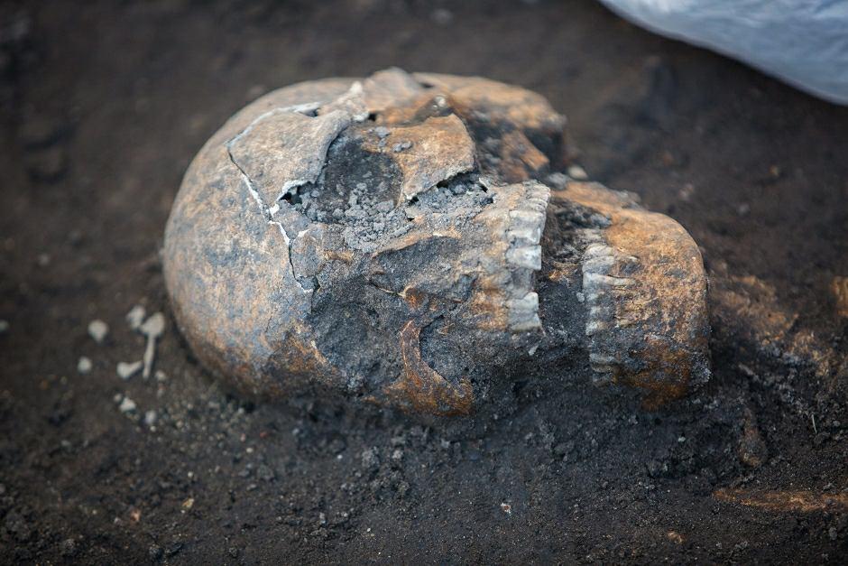 Ludzka czaszka na stanowisku archeologicznym - zdjęcie ilustracyjne