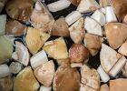 Jak długo gotować grzyby? Porady i wskazówki