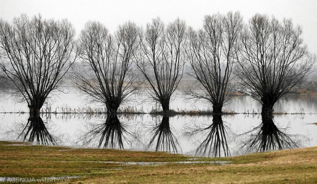 Rozlewiska rzeki Biebrzy