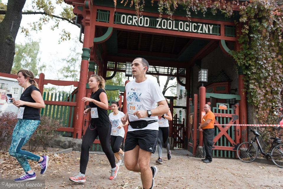 Wild Run - bieg po wrocławskim zoo