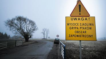 Zdjęcie archiwalne. Bolesławiec koło Poznania . Na fermie indyków w 2017 r. odkryto ptasią grypę .