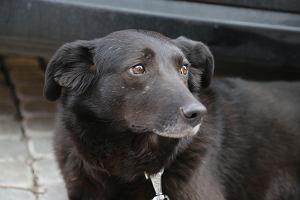Pies zemdlał na spacerze, bo miał zły kaganiec. Weterynarz: To grozi udarem. Jaki zakładacie swoim psom?