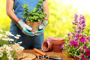 Donice do ogrodu - wybieramy najładniejsze modele w świetnej cenie