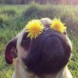 DingDog - aplikacja dla psów i ich właścicieli