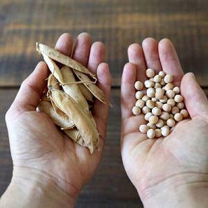 Zamiennik tofu, produkowany z grochu.