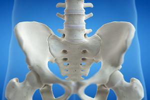 Kość krzyżowa - charakterystyka, budowa, schorzenia