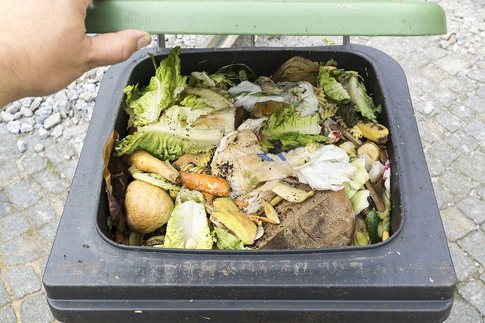 Odpady BIO - które śmieci do nich zaliczamy i jaki pojemnik wybieramy? Zdjęcie ilustracyjne