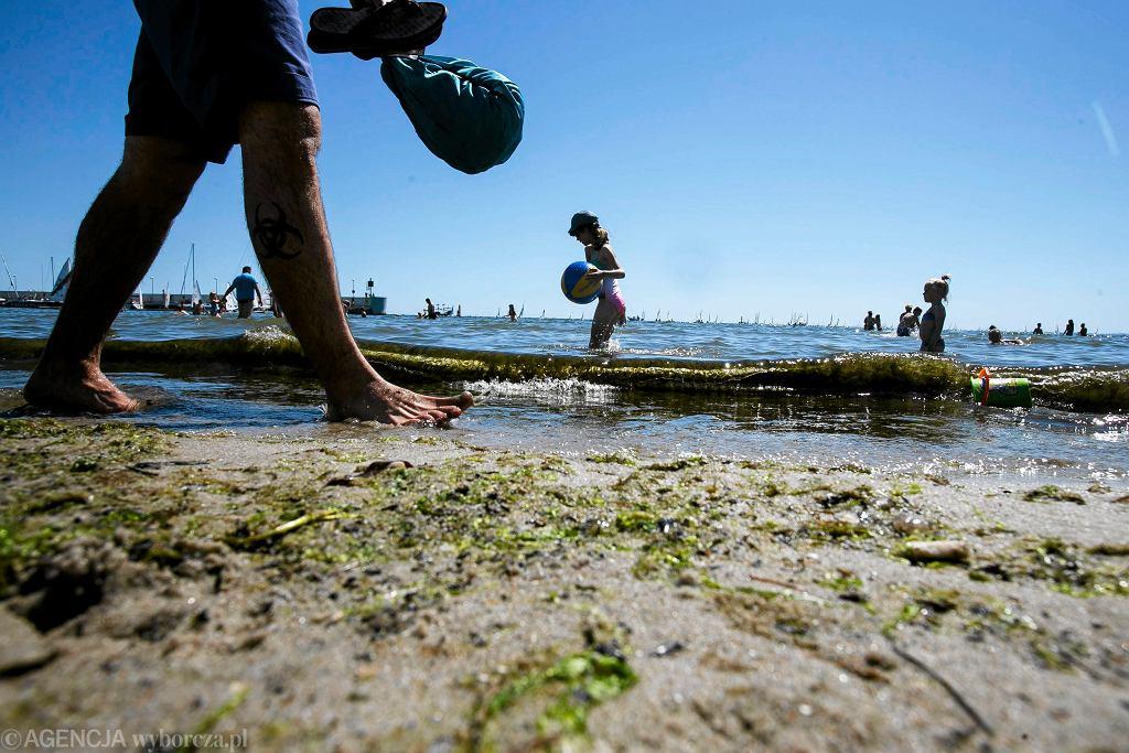 Sinice zakwitły w Bałtyku - zdjęcie ilustracyjne