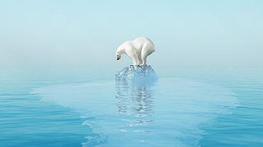 Na Oceanie Arktycznym jest coraz mniej lodu morskiego, a to z niego niedźwiedzie polarne polują na foki