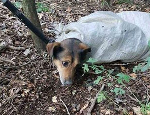 Pies znaleziony w worku