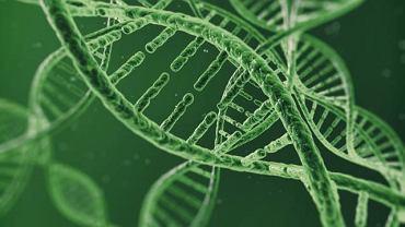 Za sprawą mutacji genetycznej jedne z białek występujących w ludzkim organizmie przestają spełniać swoją rolę, tym samym przyczyniają się do poważnych zmian m.in.  w obrębie układu nerwowego