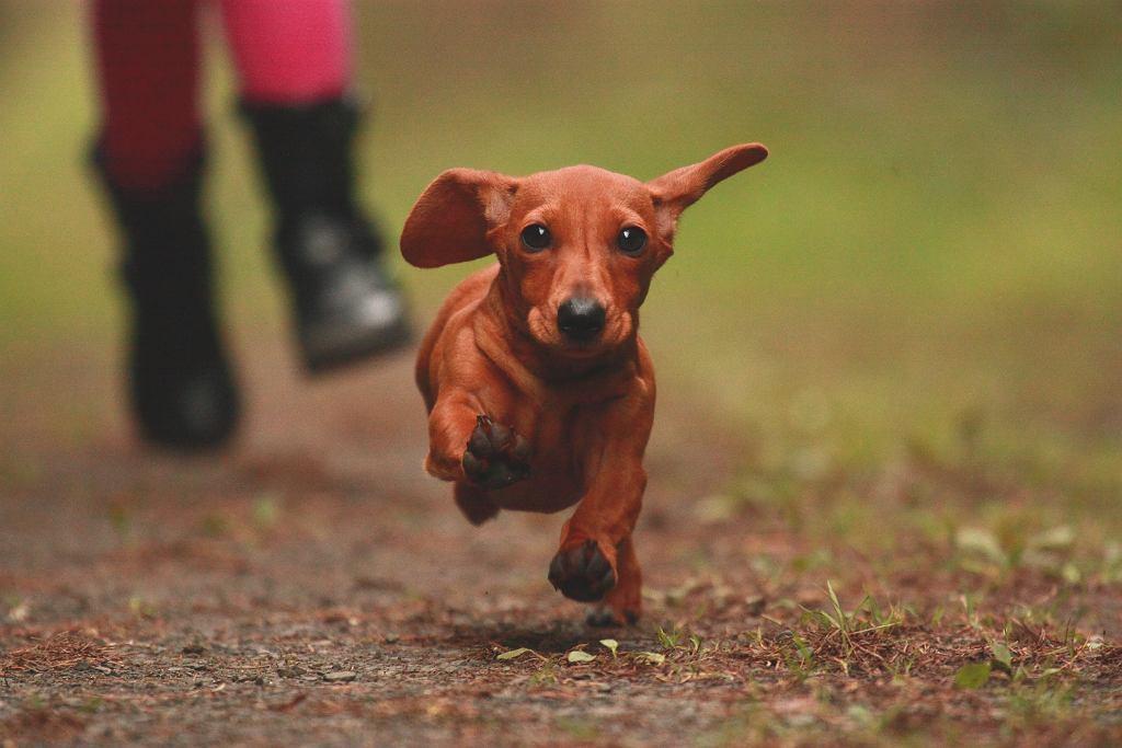 Jak chronić psa przed kleszczami? Domowe sposoby wystarczą? Sprawdź, co trzeba wiedzieć