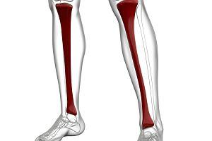 Piszczel - jak jest zbudowana, co może oznaczać ból tej kości?