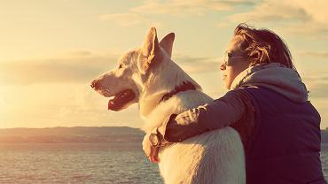 By policzyć wiek psa, należy pomonożyć go przez 7? Naukowcy obalają popularne przekonanie