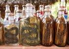 Ze śliny, węża i robaków: dziwne alkohole