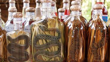 Ze śliny, węża i robaków: dziwne alkohole. Wężówki wyglądają interesująco, ale smakiem tych wódek mogą zachwycić się tylko miłośnicy dziwnych trunków